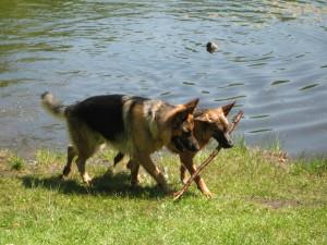 aalborg-hundetraening